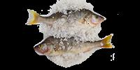 Salted Tilapia